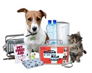Preparing your Pet for Irma